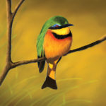 A digital painting of a little bee eater.