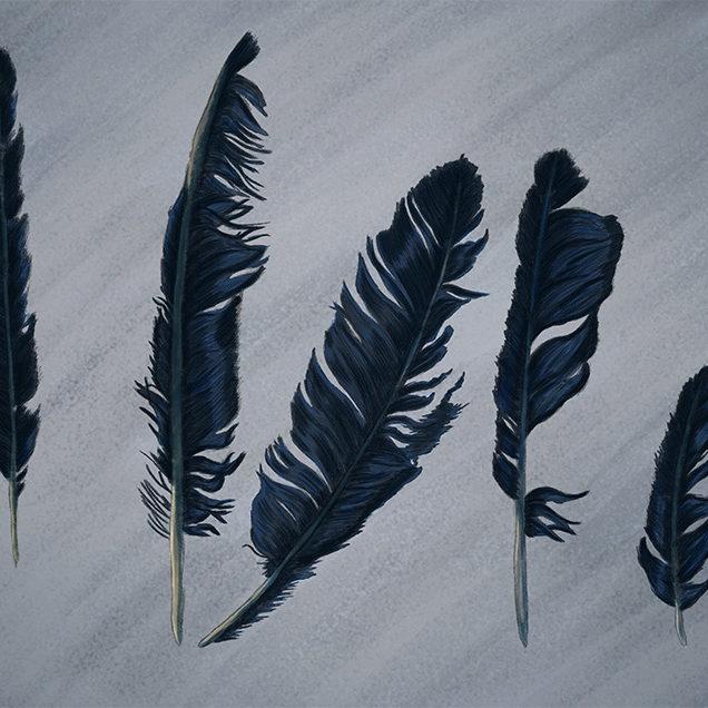 Digital illustration of crow feathers.