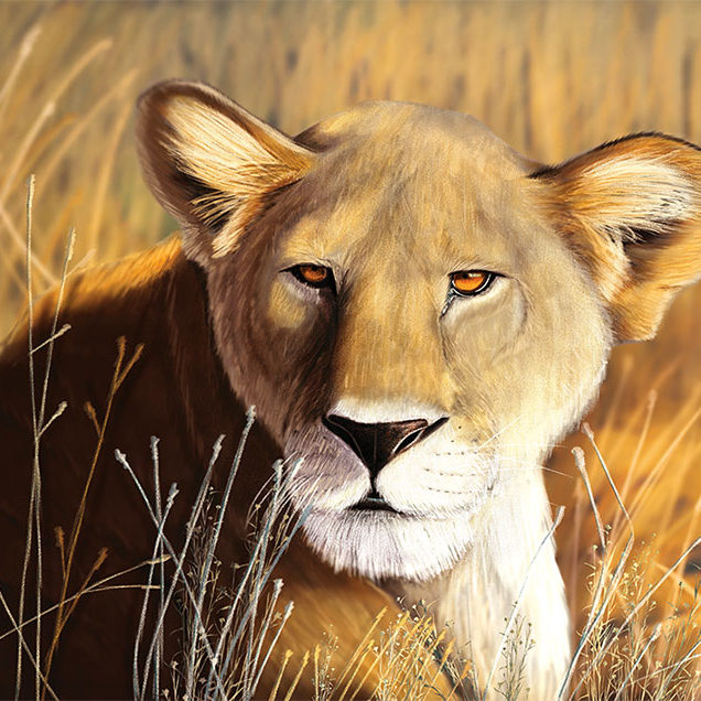 A digital illustration of a lioness, laying in tall savannah grass.
